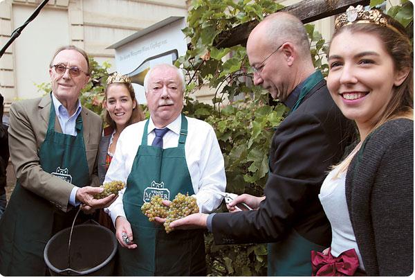 kleinster Weingarten Wiens