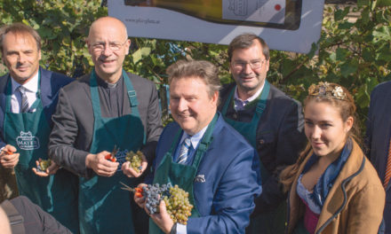 Bürgermeister – Weinlese im kleinsten Weingarten Wien`s