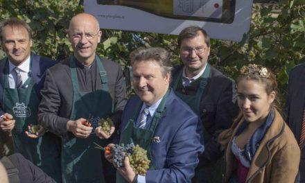 Bürgermeister-Weinlese im kleinsten Weingarten Wien´s