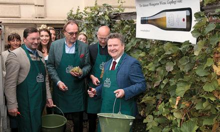 Prominente Weinlese im kleinsten Weingarten Wiens